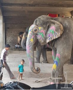 children and elephant at a shelter in Amer, Rajasthan, India