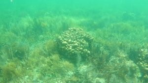 coral mounds found while snorkeling at bocas del toro panama